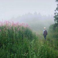 Дорога в лес :: Валерий Талашов