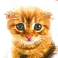 мой котейка :: Viktoriya Bilan