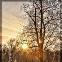Зимнее солнце :: Леонид