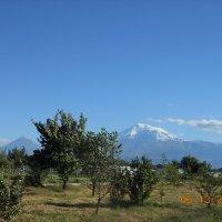 Гора Арарат :: Geghanush A