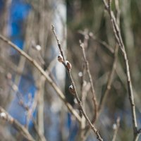Весна :: Константин Смирнов