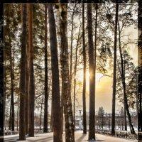 Зима и солнце :: Леонид