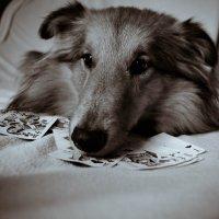 Собачья безысходность :: Nikki