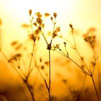 мир глазами фотографа :: Alex DO