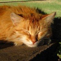 Я на солнышке лежу... :: milaЯ ...
