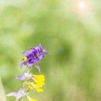Цветок :: Ирина Яздан Мехр