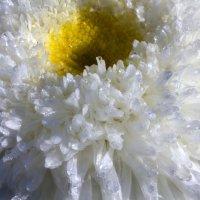 цветы :: олег