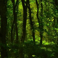 Forest :: Алексей Горбатько