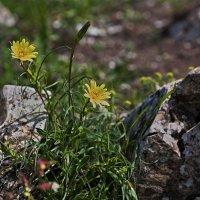 вздыхают камни по цветам :: Валерий Дворников