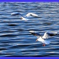 Чайки :: Marina Marina
