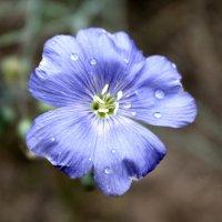 лесные цветы :: Александр Григоришин