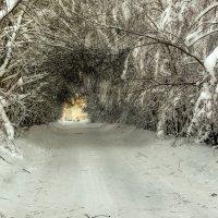 Дорога в Заозерье... :: Федор Кованский