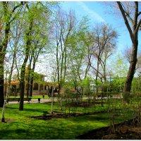 Тёплые дни весны... :: Тамара (st.tamara)