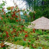 Здравствуй, Вьетнам! :: Чария Зоя