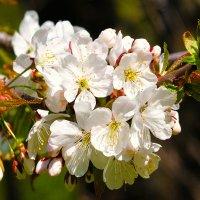 Дары весны :: Nikolay Monahov