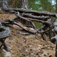Тайный лес :: Татьяна Виноградова
