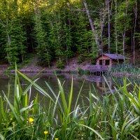 Лесное озеро :: Александр Хорошилов