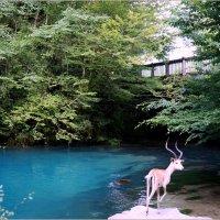Абхазия...Голубое озеро... :: Наталья Агеева