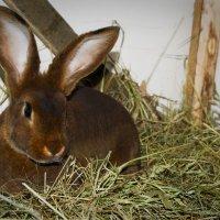 Красивый кролик :: Людмила Керстя