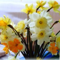 Весенние цветочки... :: Наталья Агеева
