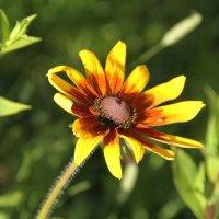 цветы с дачи :: esadesign Егерев