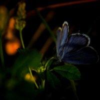 Бабочка :: ILANA Gvozdievskaya