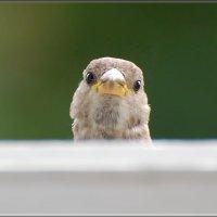 Здрасьте, это я! :: linnud