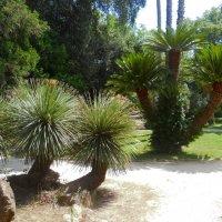Экзотические растения. Palaz Real. :: Лариса Евдокимова