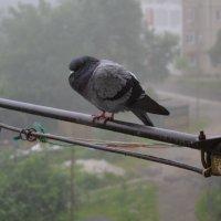 Под дождиком... :: Оксана ♪