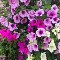 Цветы :: Ольга Богачёва