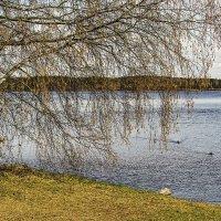 Ветви над водой :: Valerii Ivanov