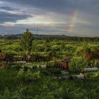 После дождя :: Аркадий Беляков