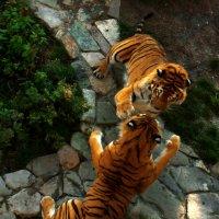 Тигры :: Андрей Бедняков