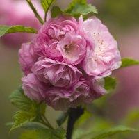 С ветерком вдохни Весну... :: Наташа (tasha7) Хомутецкая