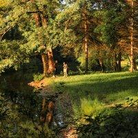 В летнем парке :: Лариса Шамбраева