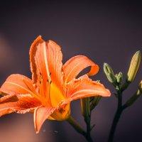 солнечный цветок :: Татьяна Исаева-Каштанова