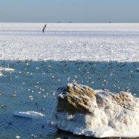 Вдали лёд... :: Raisa Ivanova