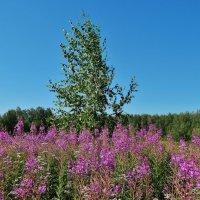 Летний день в июле :: Валентина Пирогова