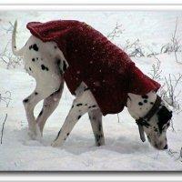 Что там под снегом ... :: Сергій Полухін