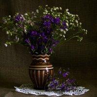 Полевые цветы :: Ольга Семенова