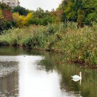 Осенний пруд... :: Тамара (st.tamara)