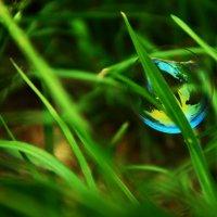 Мыльный пузырь :: Ксения Николаенко
