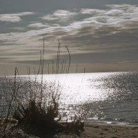 Утро на Куршском заливе :: Ирина Шарапова
