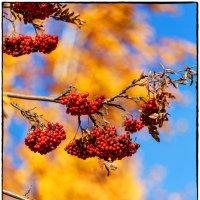 Осенние ягоды :: Leo Alex Photographer