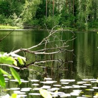 У озера :: Владимир Гилясев