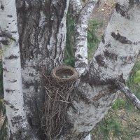 Появились жители гнезда :: Domna Kuznechic