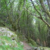 по тропинке через лес :: Olga