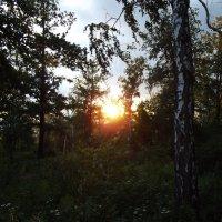 Закат в лесу :: Marat G