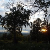 Закат в лесу2 :: Marat G