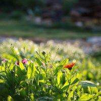 Раздолье для растений :: Артем Бардюжа